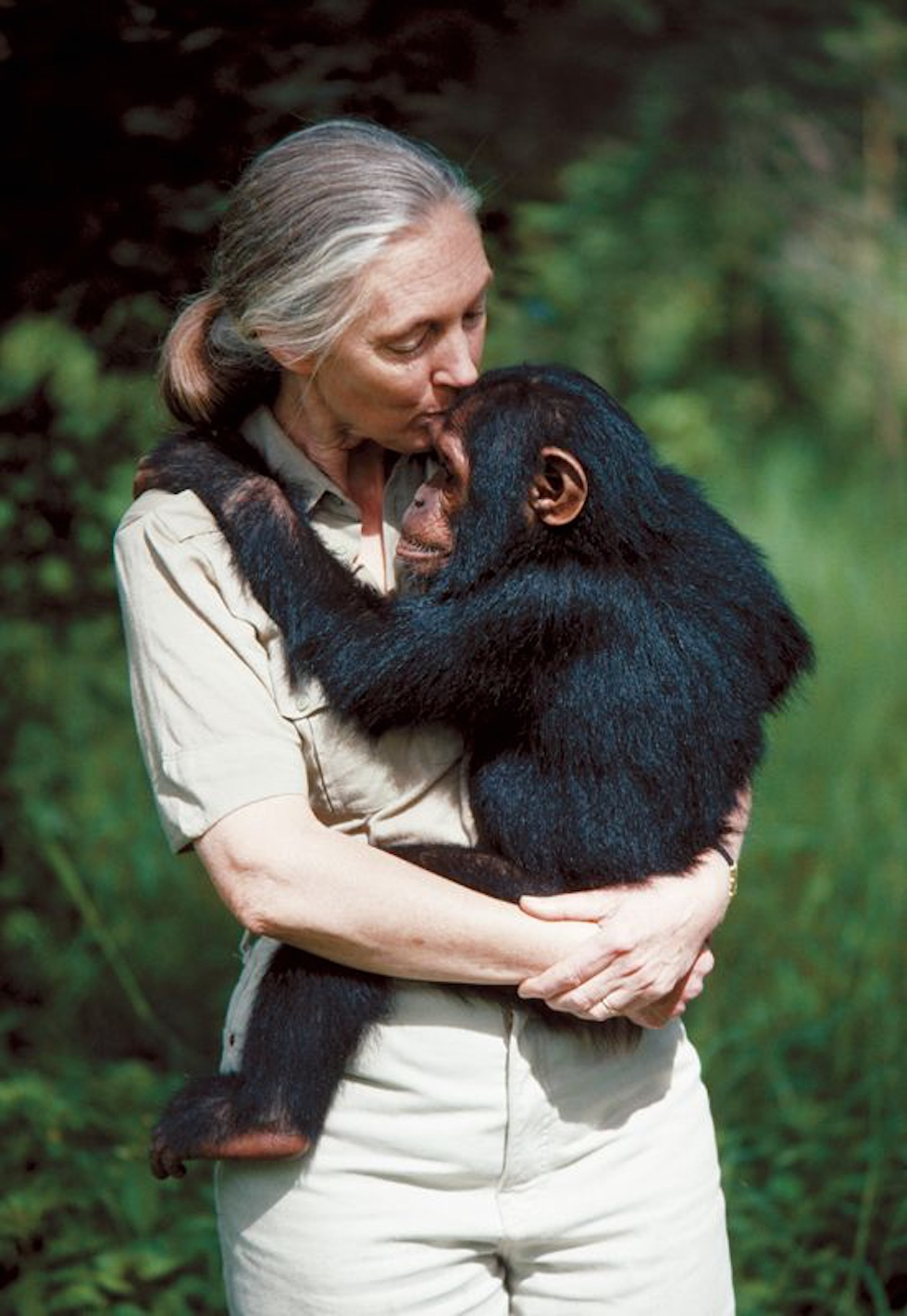 jane goodall wildlife warrior